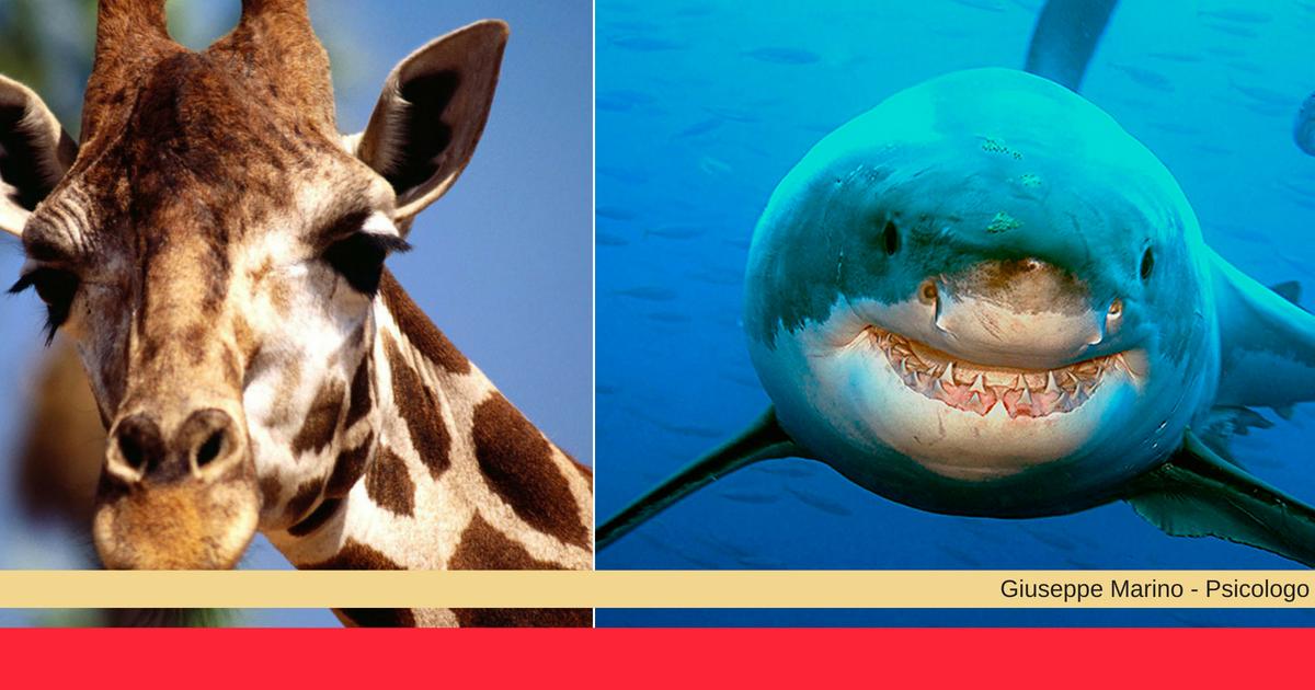 Gestire le relazioni: esistono due modi - come le giraffe e come gli squali