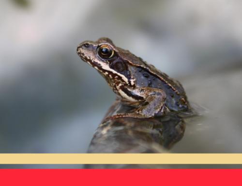 L'esperimento della rana bollita – Il segreto del cambiamento